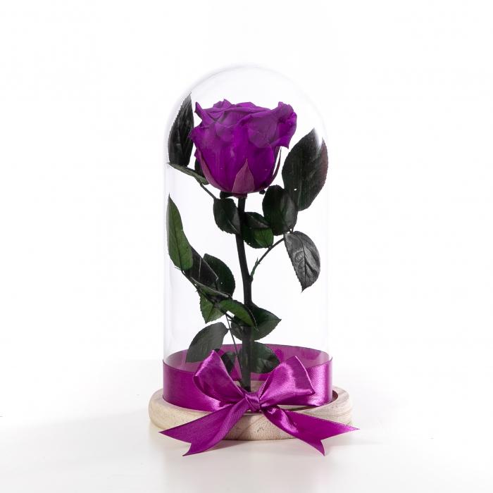 Trandafir Criogenat Mov [1]