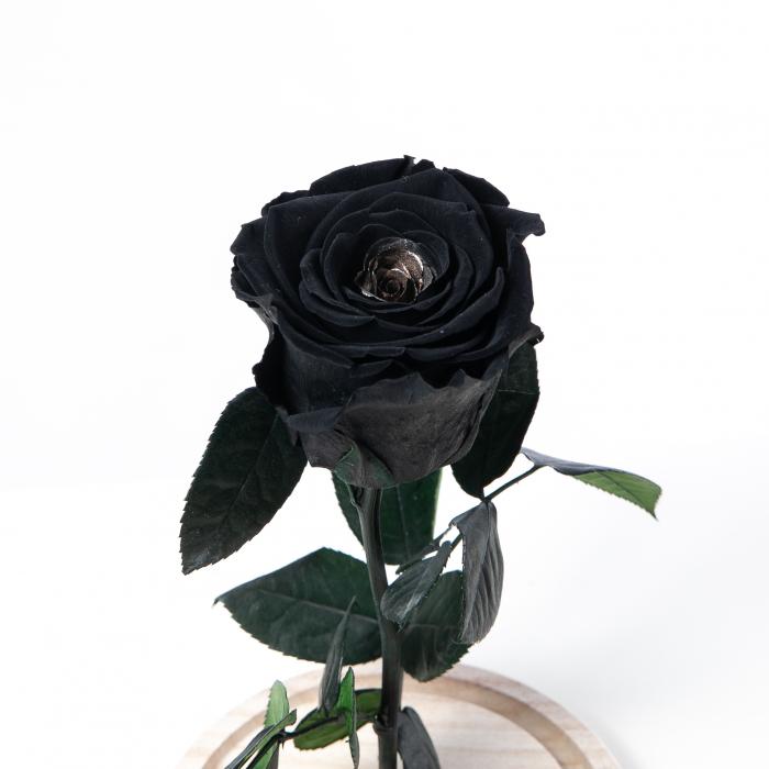 Trandafir Criogenat Negru [1]