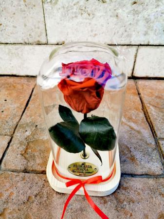 Trandafir Criogenat [0]