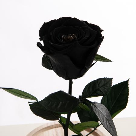 Trandafir Criogenat Negru [0]