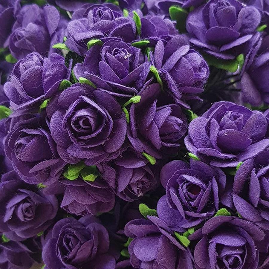 mov - trandafir