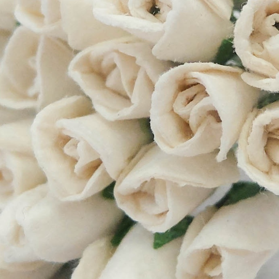 alb murdar - boboc trandafir