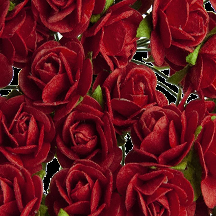 rosu inchis - trandafir