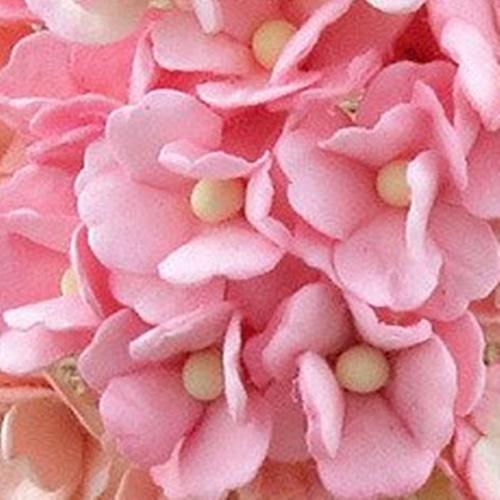 roz - floare de cires