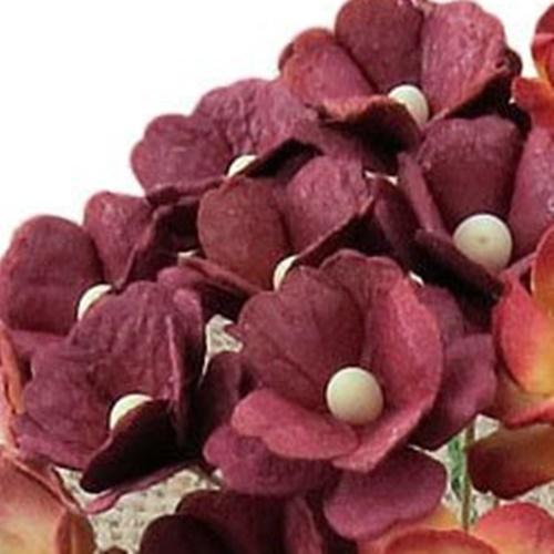 visiniu - floare de cires
