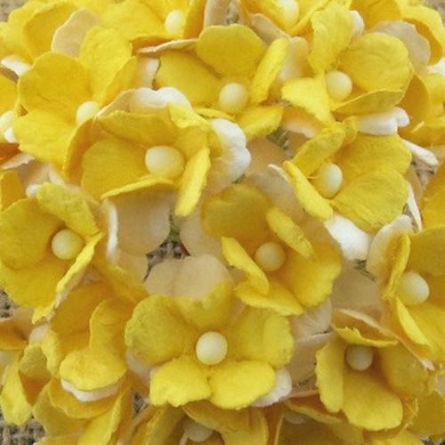 galben - alb - floare de cires