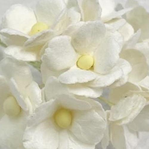 alb - floare de cires