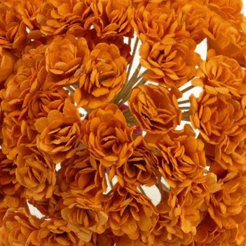 portocaliu - gypsophila