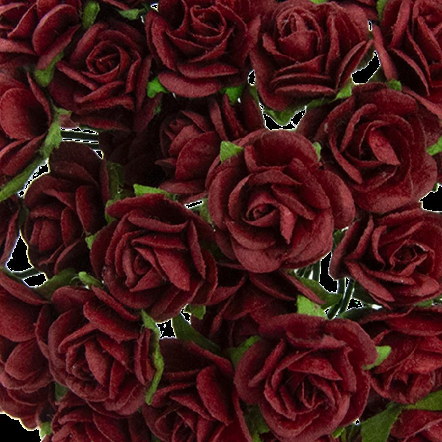 bordo - trandafir