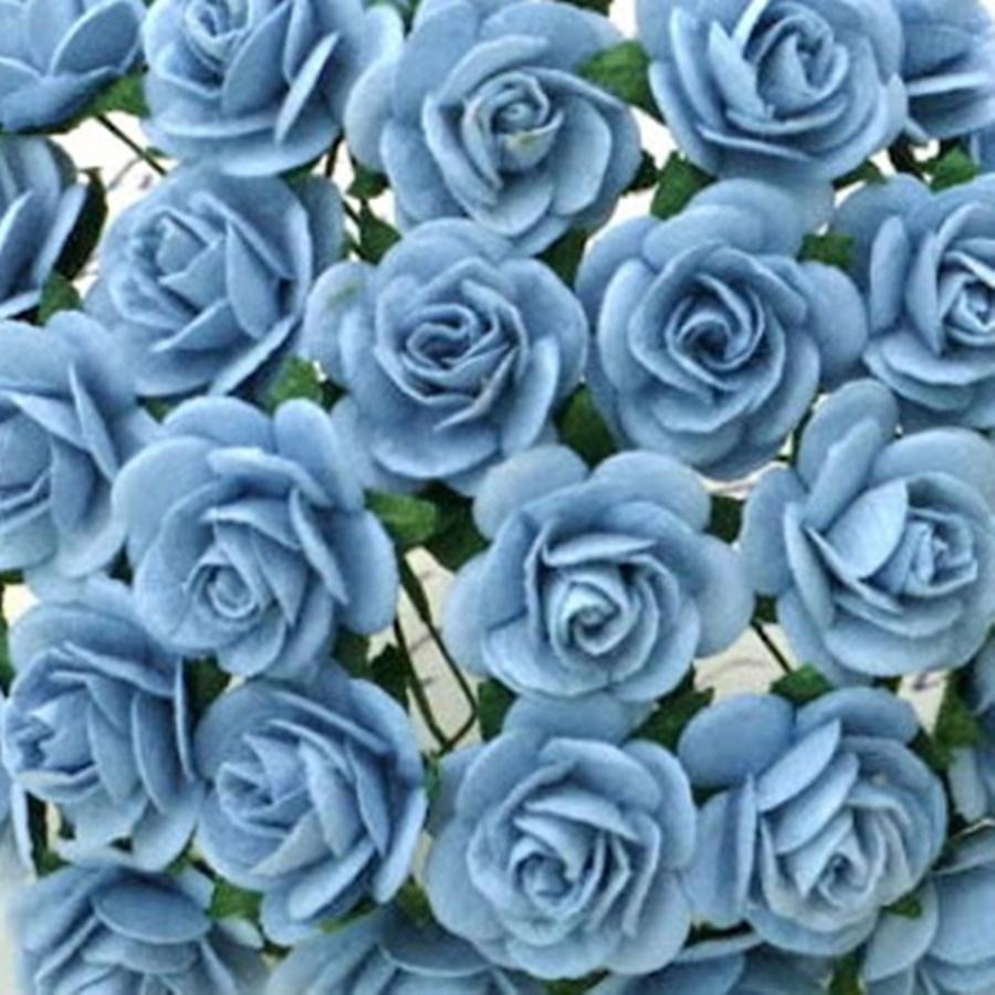 albastru deschis - trandafir