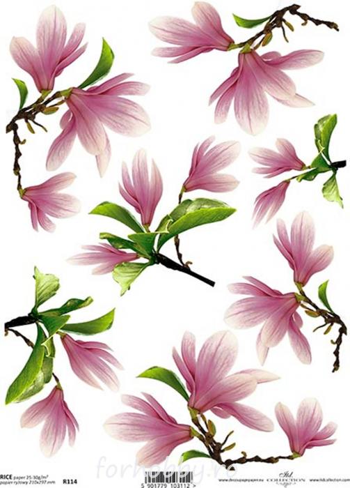 hartie-de-orez-magnolia-itd-collection-r0114 0