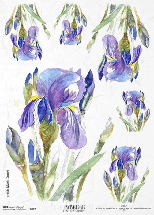 hartie-de-orez-iris-itd-collection-r0897 0