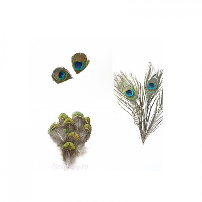 pene-decorative-de-paun-marimi-diferite 0