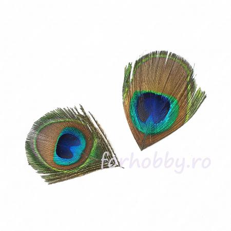 Pene decorative de păun - Mărimi diferite1