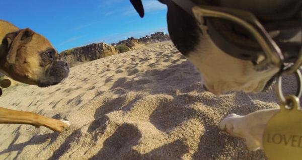 GoPro Fetch (Dog Harness) - ham pt montarea pe caini a camerelor GoPro 6