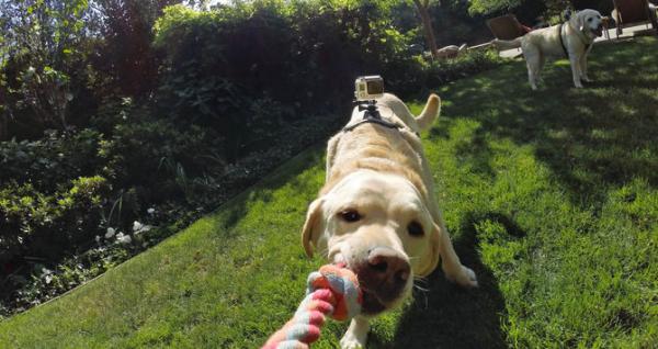 GoPro Fetch (Dog Harness) - ham pt montarea pe caini a camerelor GoPro 4