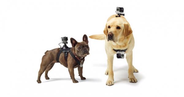 GoPro Fetch (Dog Harness) - ham pt montarea pe caini a camerelor GoPro 2