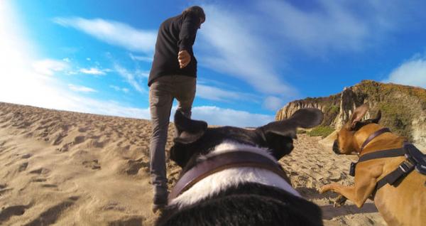 GoPro Fetch (Dog Harness) - ham pt montarea pe caini a camerelor GoPro 5