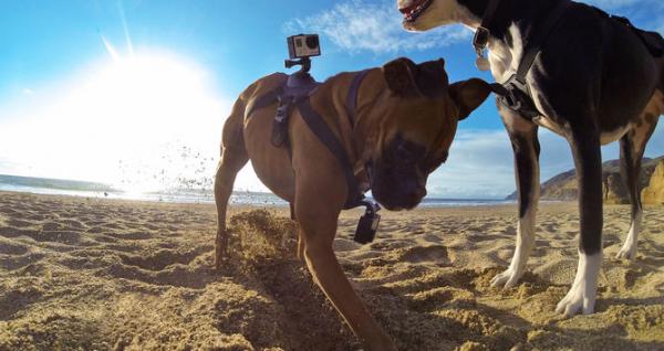 GoPro Fetch (Dog Harness) - ham pt montarea pe caini a camerelor GoPro 3
