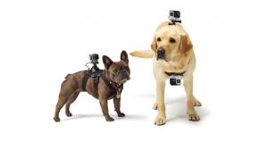 GoPro Fetch (Dog Harness) - ham pt montarea pe caini a camerelor GoPro2