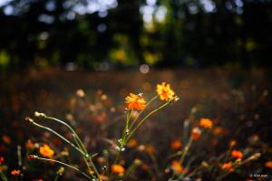 Samyang AF 35mm f/1.4 - Sony E [5]