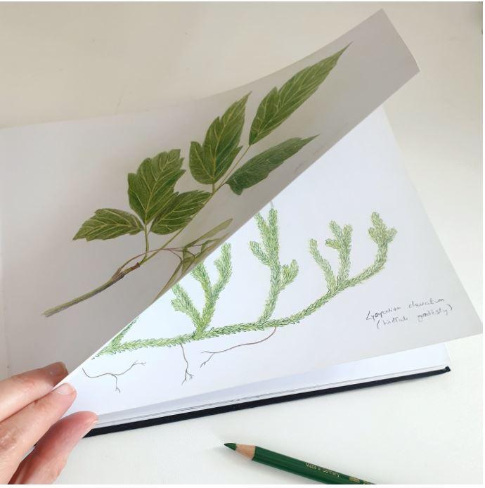 Paturica Bebelusi Pentru Scaun Auto Herbarium MKZ2232 [3]