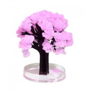 Cires Sakura infloritor1