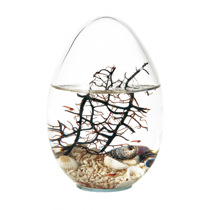 Beachworld - Gorgonia Egg 0