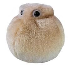 Celula grasa 1