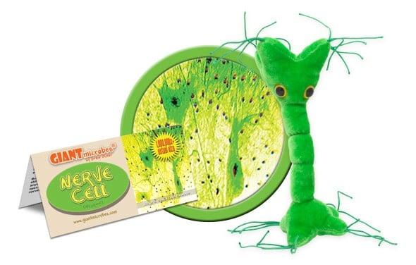 Celula nervoasa 2