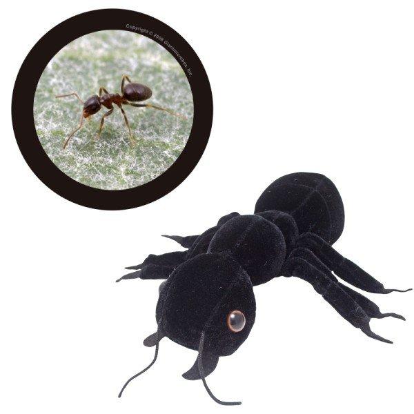 Furnica neagra 0