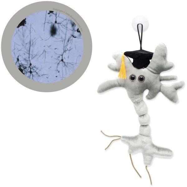 Neuronul absolvent 0