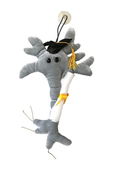 Neuronul absolvent cu Diploma 0