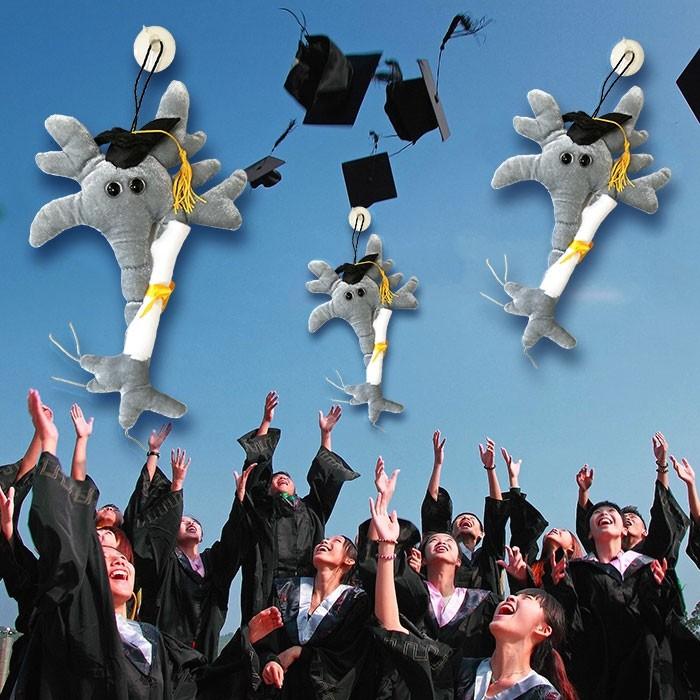 Neuronul absolvent cu Diploma 2
