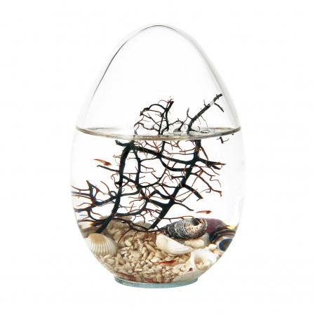 Beachworld - Gorgonia Egg0