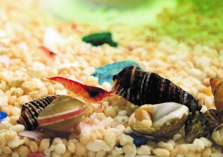 Din stoc: Beachworld Egg - Inaltime 13 cm [0]