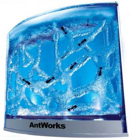 Habitat iluminat pentru furnici0