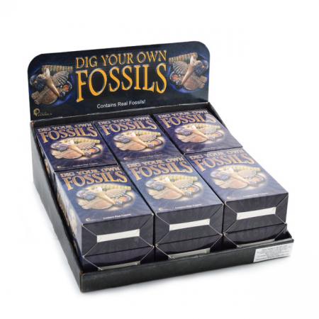 Kit paleontologie - Descopera fosile0