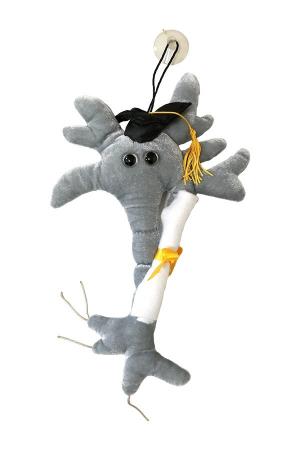 Neuronul absolvent cu Diploma0