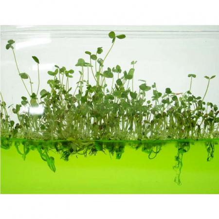 Plantarium Super [2]