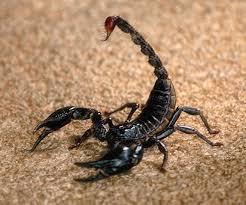 Scorpionul [1]