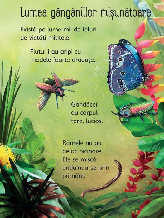 Insectele (Usborne) [2]