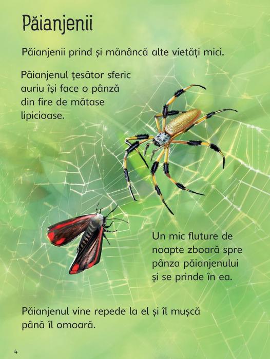Insectele (Usborne) [3]