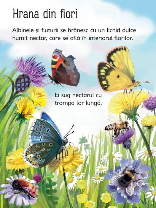 Insectele (Usborne) [5]