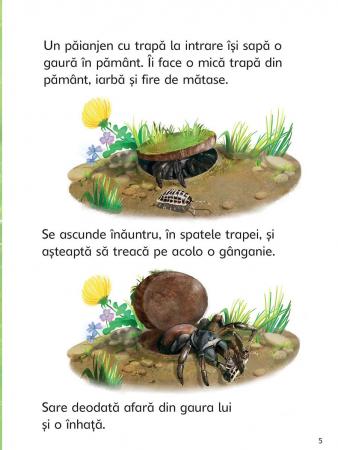 Insectele (Usborne) [4]