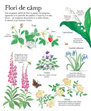 Marea carte ilustrata a naturii (Usborne) [5]