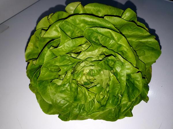 Salată verde [1]