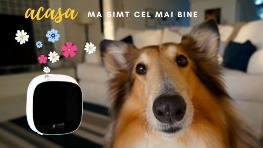 Ce odorizant e eficient pentru un miros placut in casa alaturi de animale de companie
