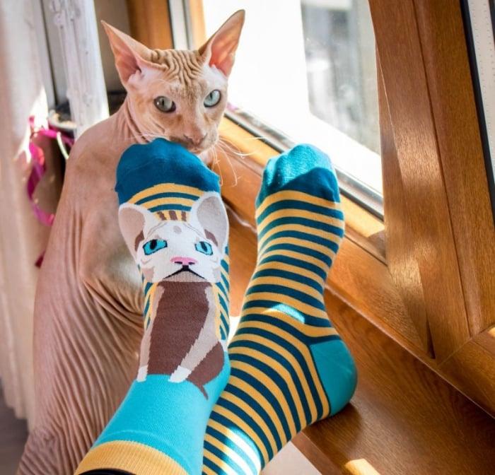 Sosete bumbac Funky Cat [3]