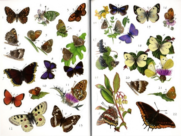 Butterflies Sticker Book 2